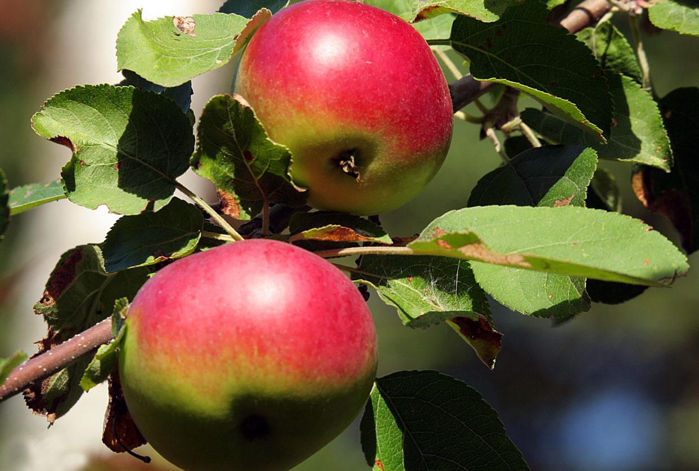 More fruit, less input