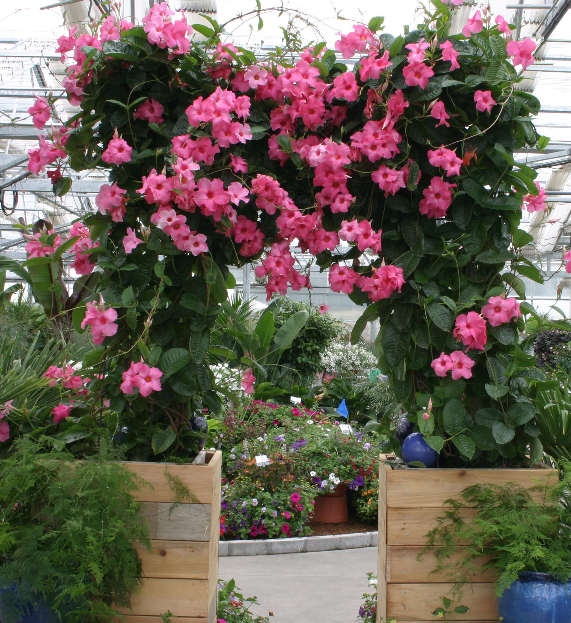Interest heats up in tender perennials plant something for Plant de villa
