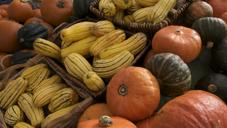 Storing squash and pumpkins