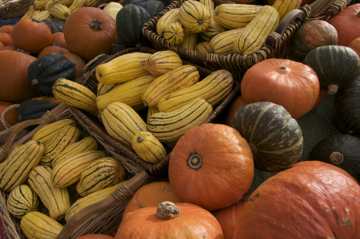 Storing squash and pumpkins