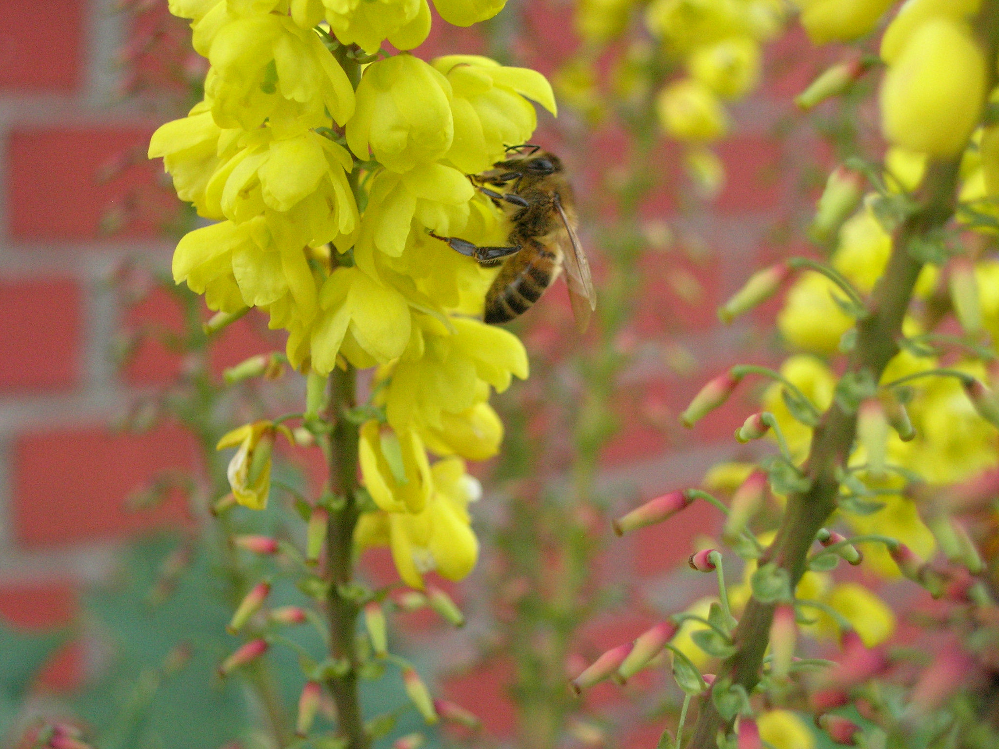 These 8 winter-blooming plants give bees needed nourishment