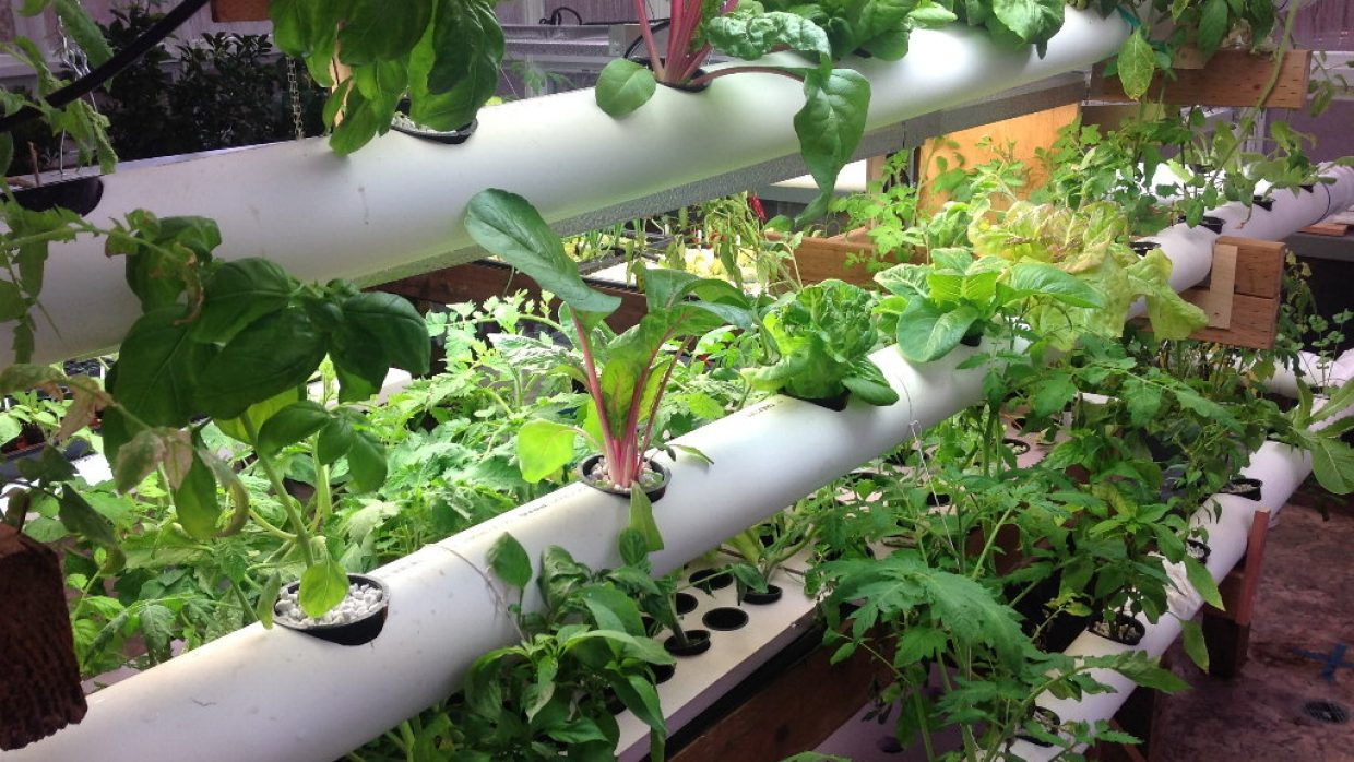 Hydroponics: Speed fresh vegetables to the table by growing in water