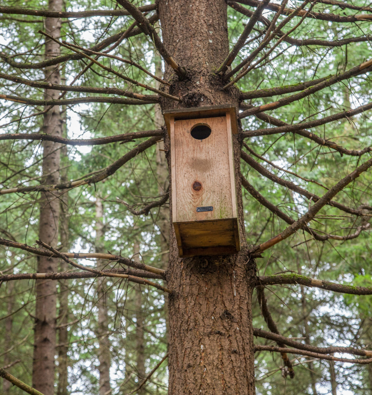 Nesting boxes invite birds to hatch babies in home gardens