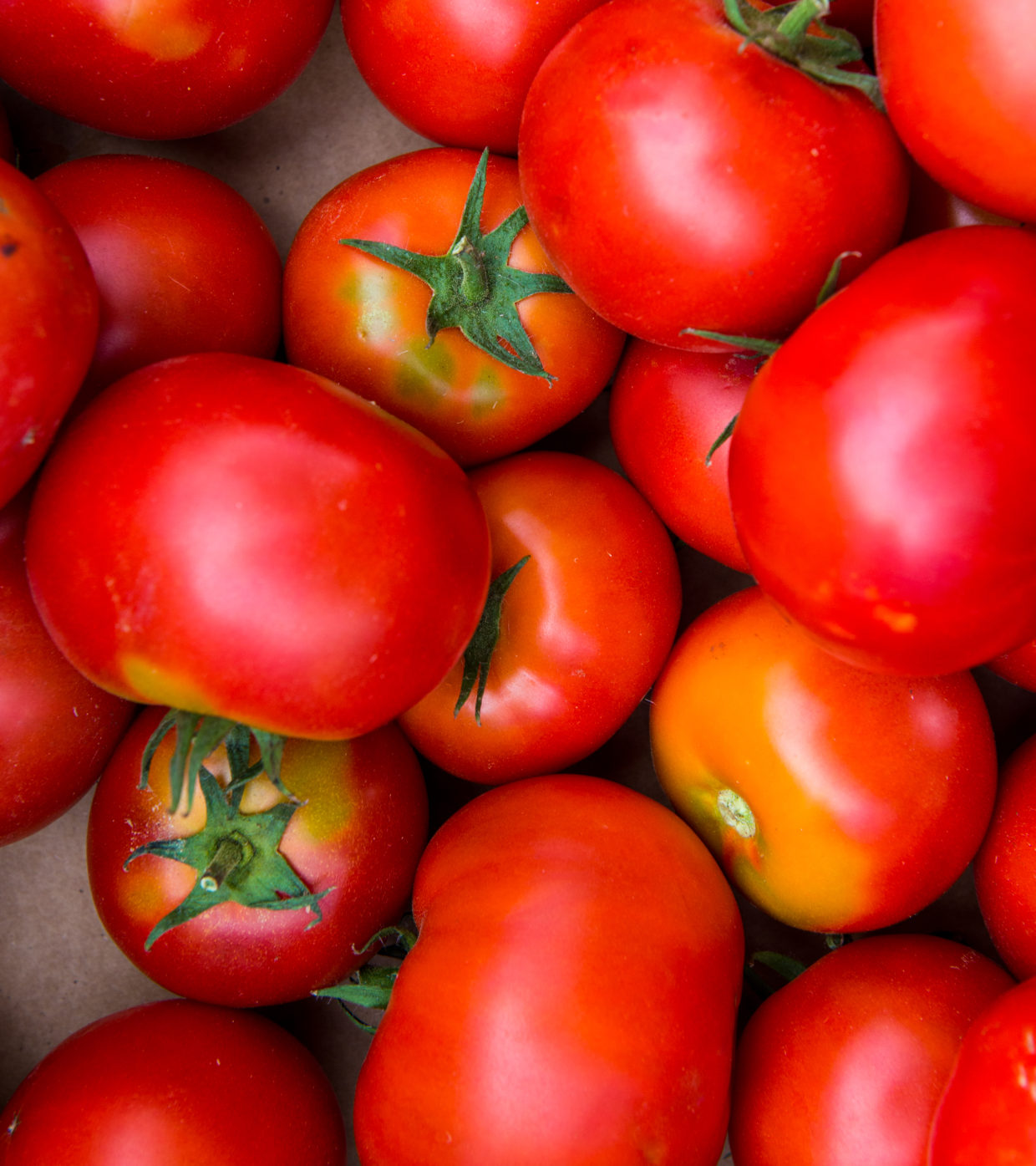 Tomato lovers: Grow the best by recognizing and solving common problems