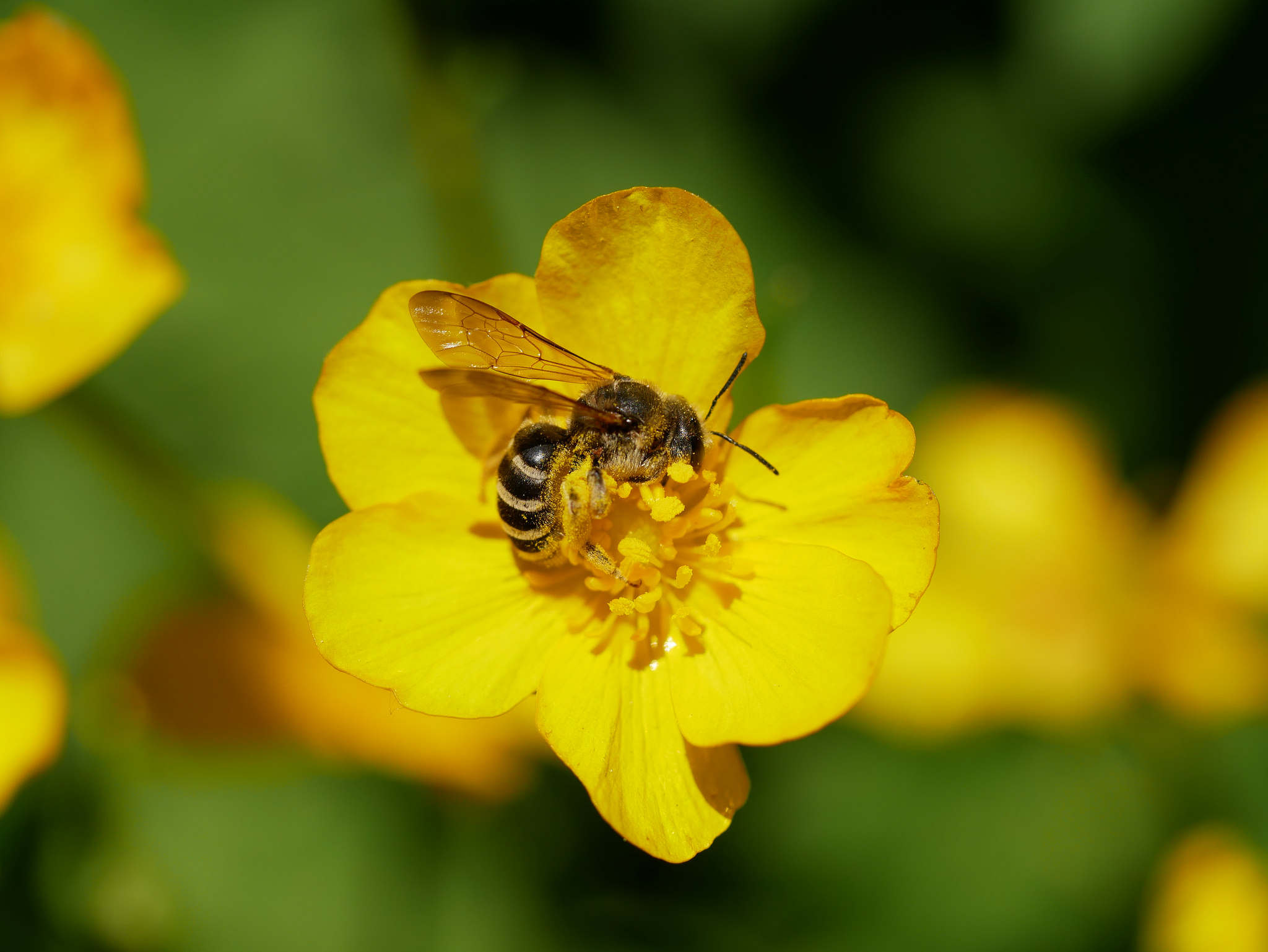 Give bees a chance by knowing their needs