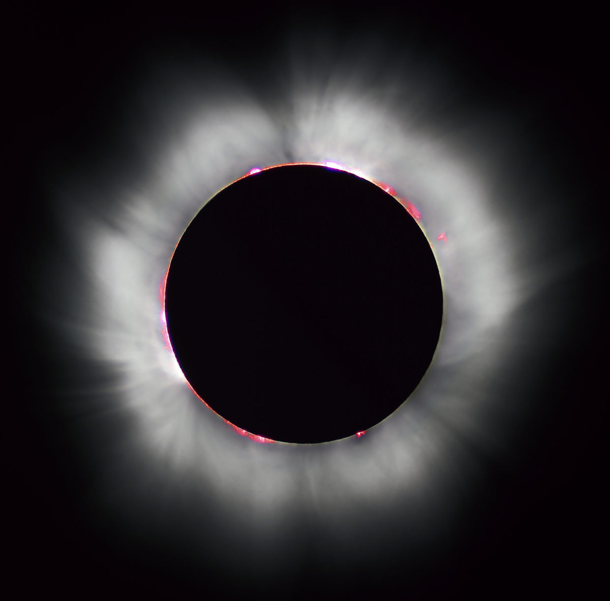Eclipse watch: How will plants and critters respond?