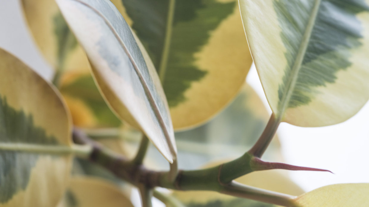 Head off houseplant pests with vigilance and cleanliness
