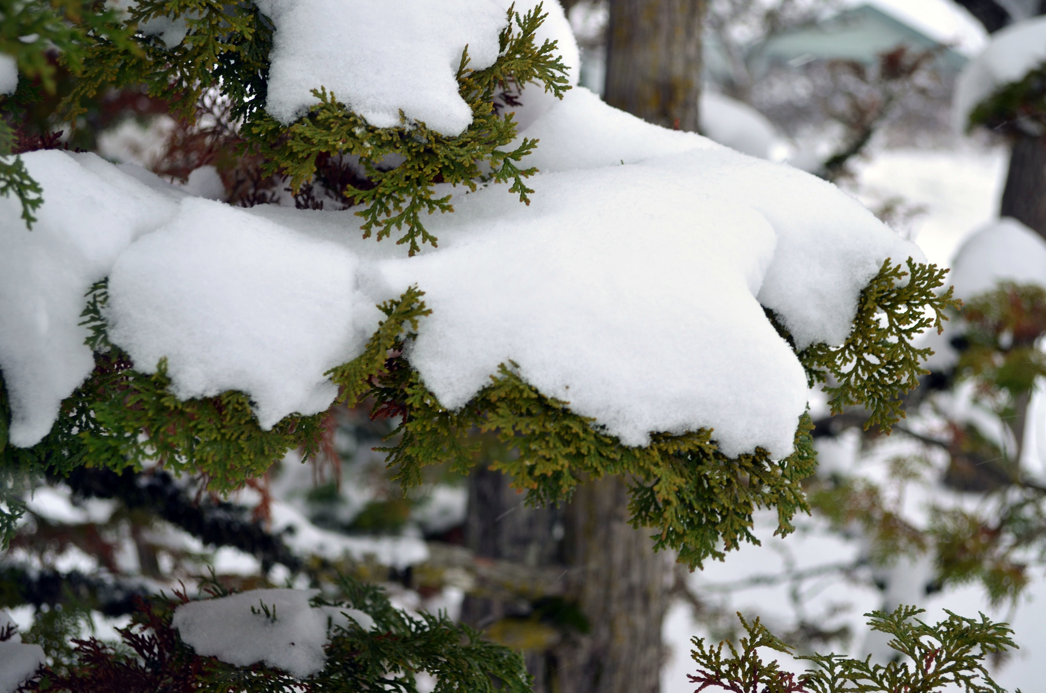 8 tips to gear up garden for cold weather