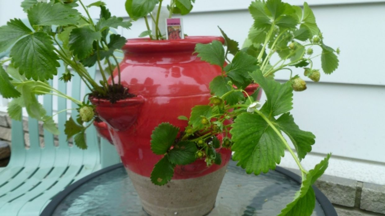 No room for vegetables? Pot up your plants