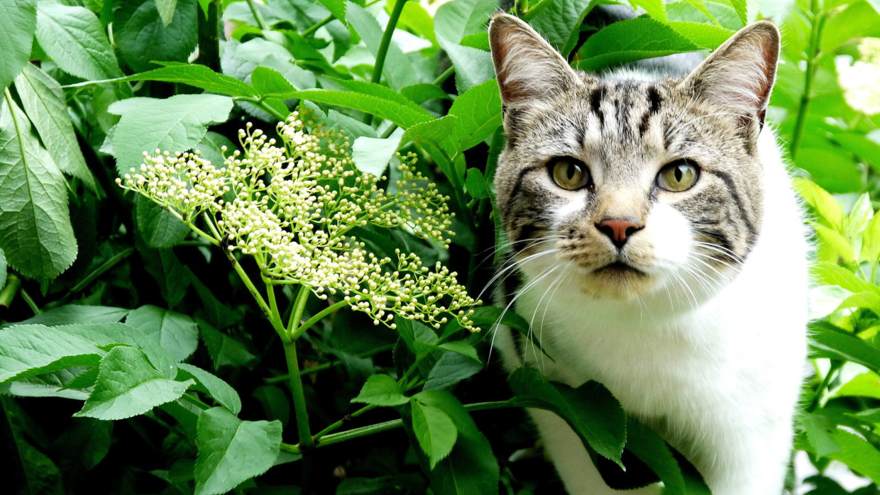 How to keep frustrating felines out of the garden