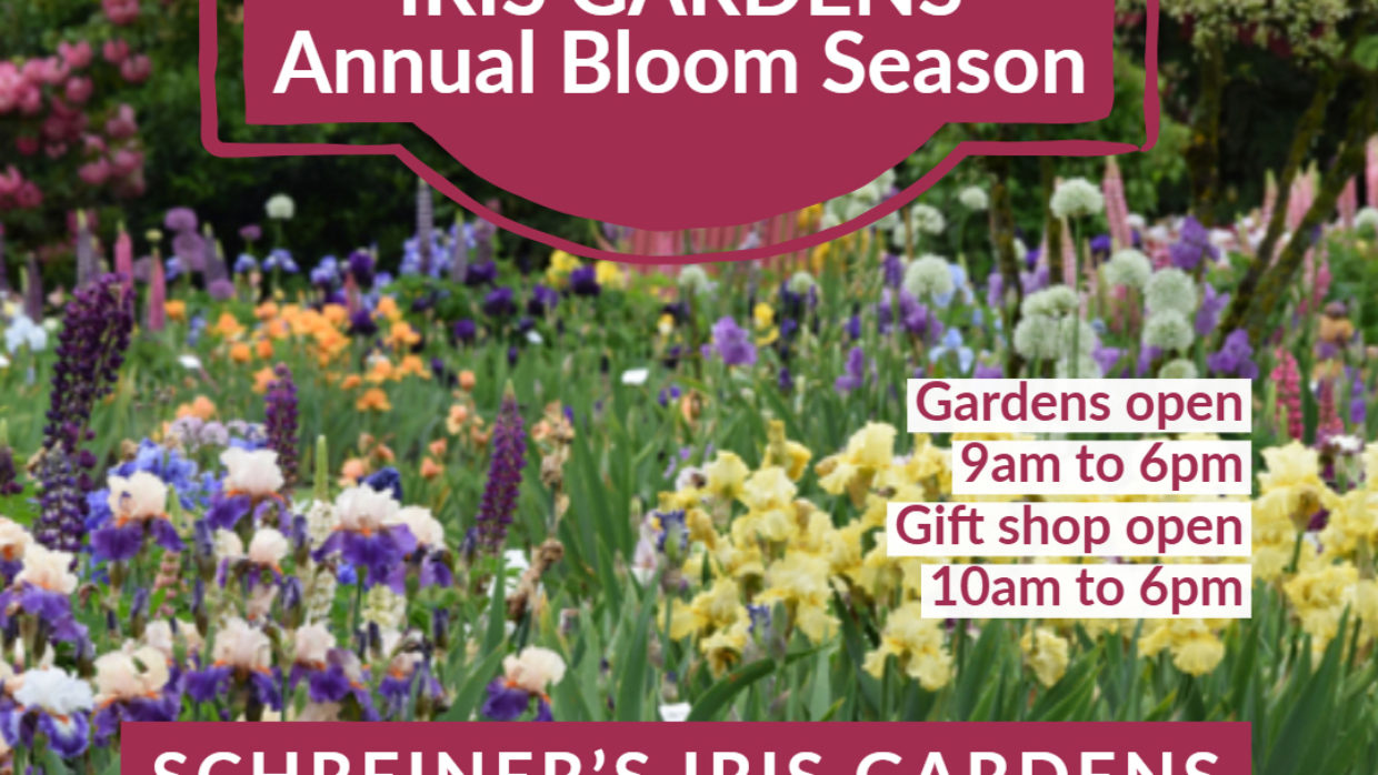 Annual celebration of Irises at Schreiner's Iris Gardens