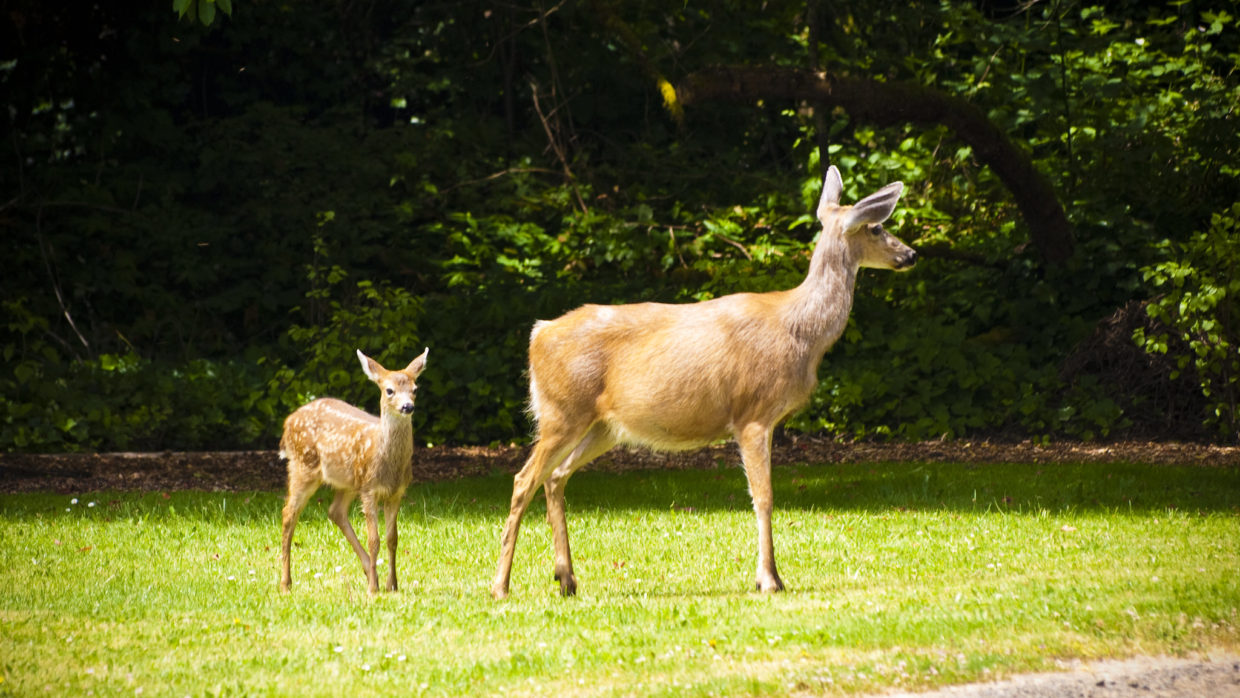 Barring wildlife helps get your space back