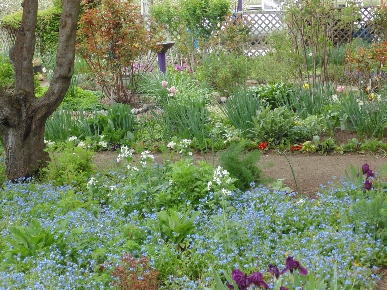 5 easy ways to be sustainable in the garden