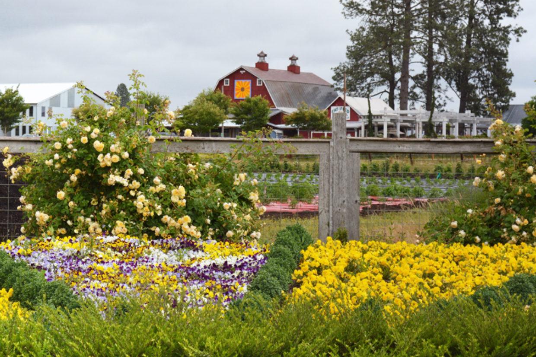Retail Nursery Spotlight – Blooming Junction