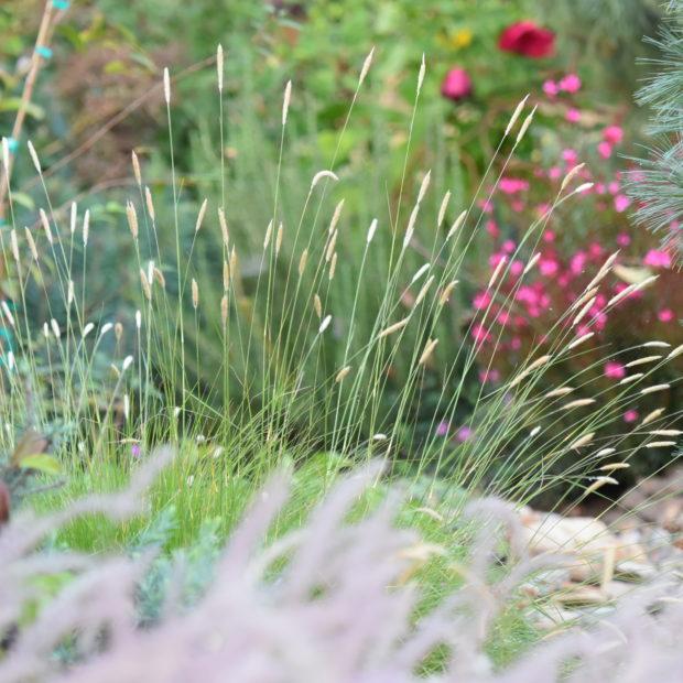 Retail Nursery Spotlight – Out in the Garden
