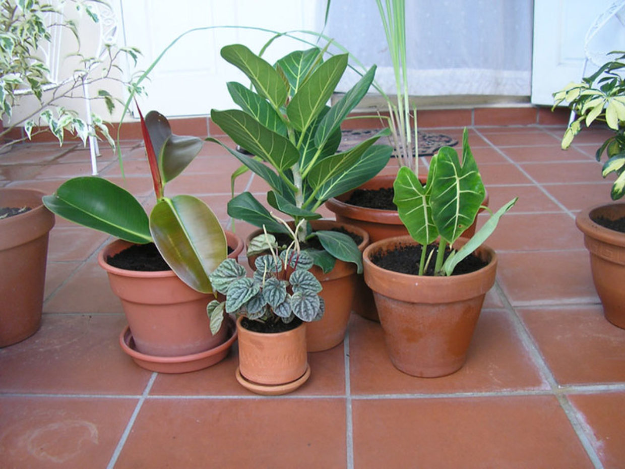 Light exposure key for growing successful houseplants