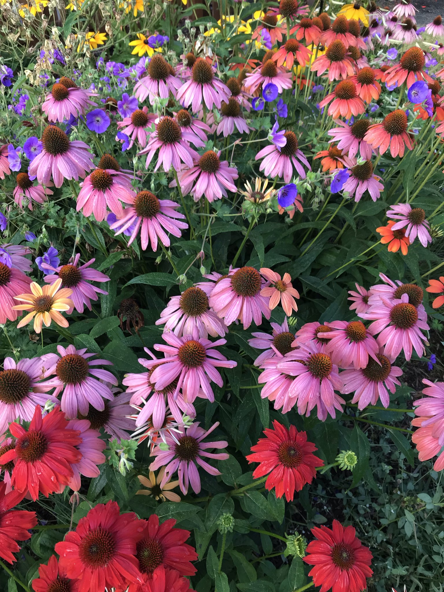 Divide and conquer plants to keep them healthy and productive