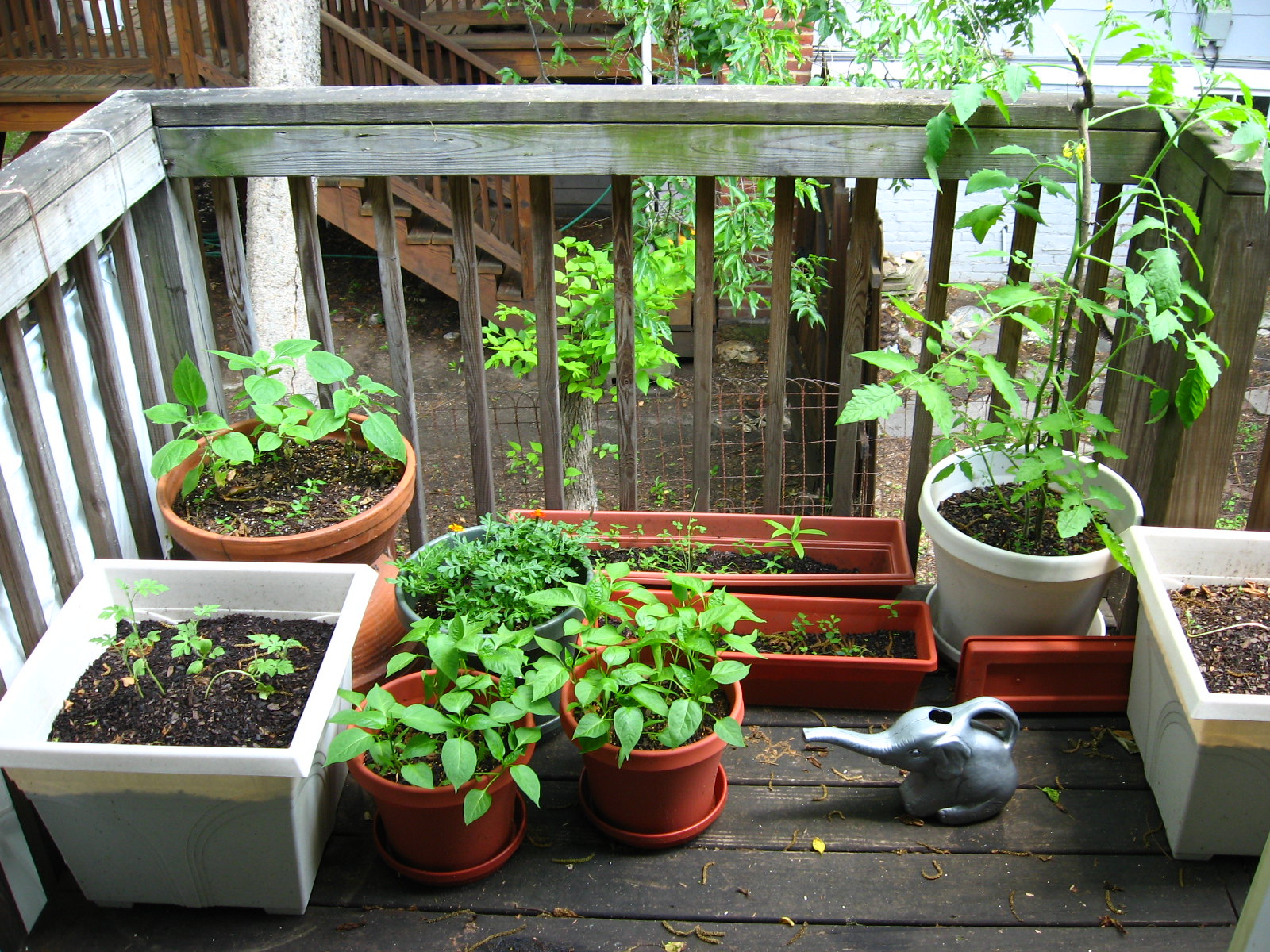 Don't let lack of room discourage you from gardening