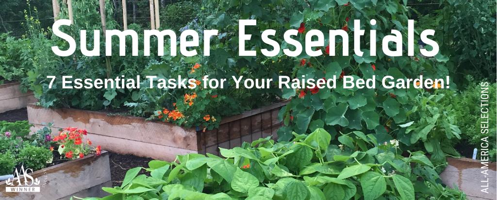 7 essential summer tasks for a raised bed vegetable garden