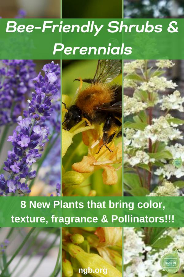 8 New Plants Create A Pollinator-Friendly Garden
