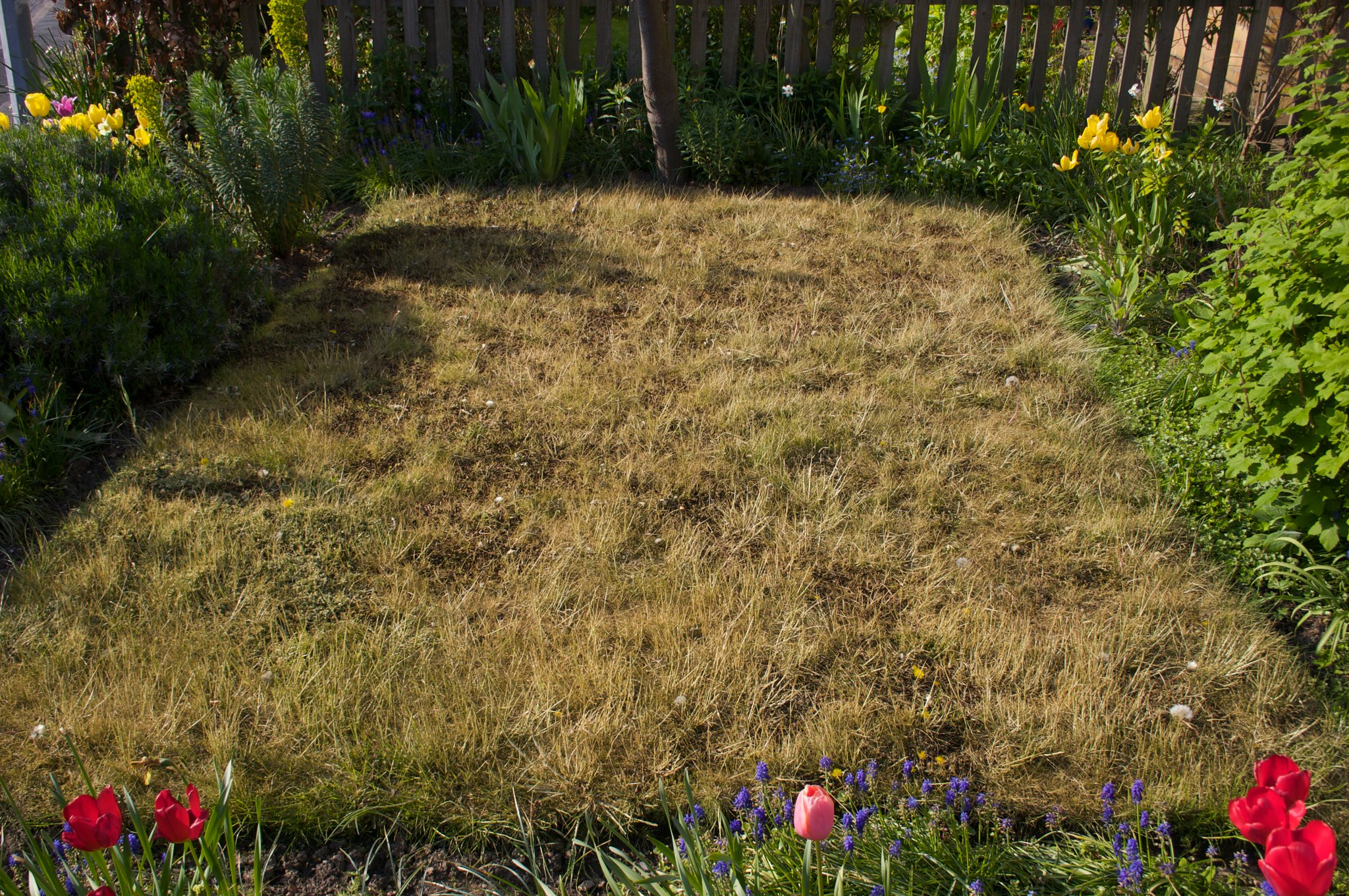 When it's time to say goodbye to lawn, uproot it first