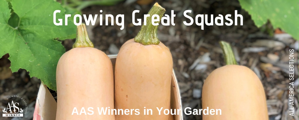 Secrets to Growing Great Squash