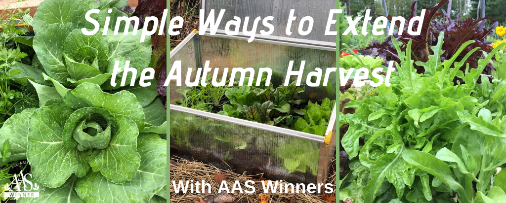 Simple Ways to Extend the Autumn Harvest