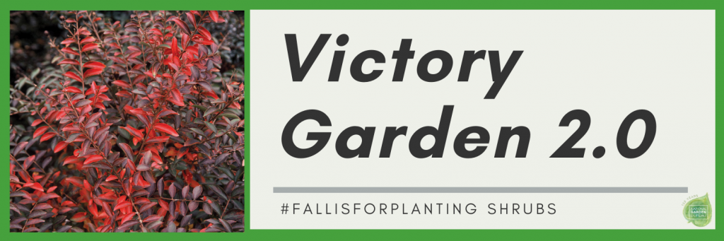 Fall is the perfect time to plant shrubs