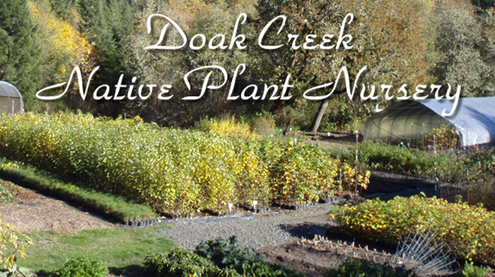 Doak Creek Native Plants