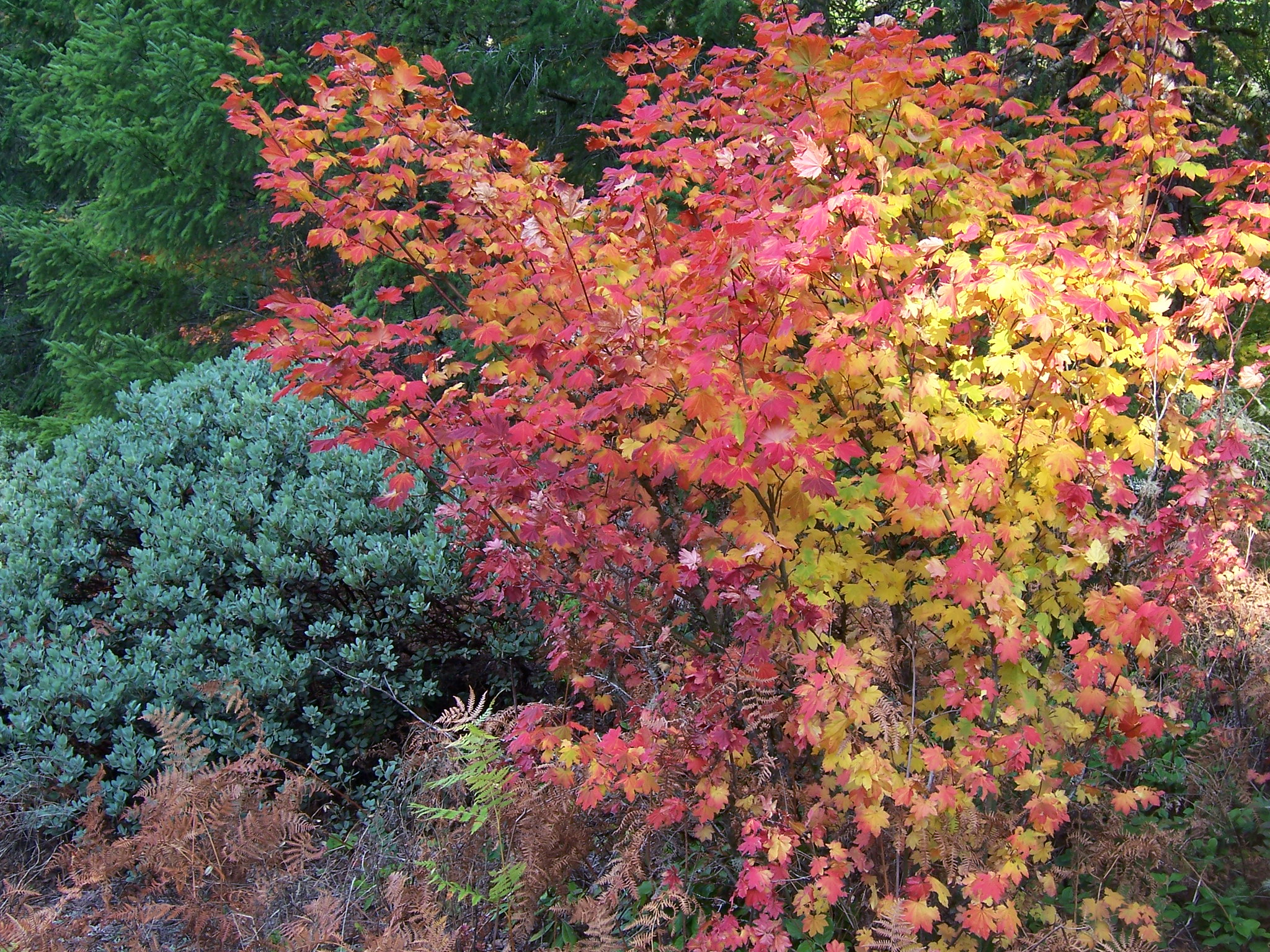 10 trees for fiery fall foliage