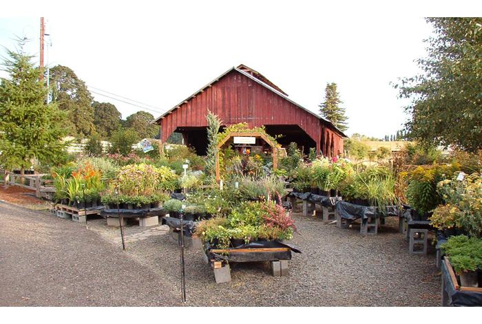 Garden Thyme Nursery