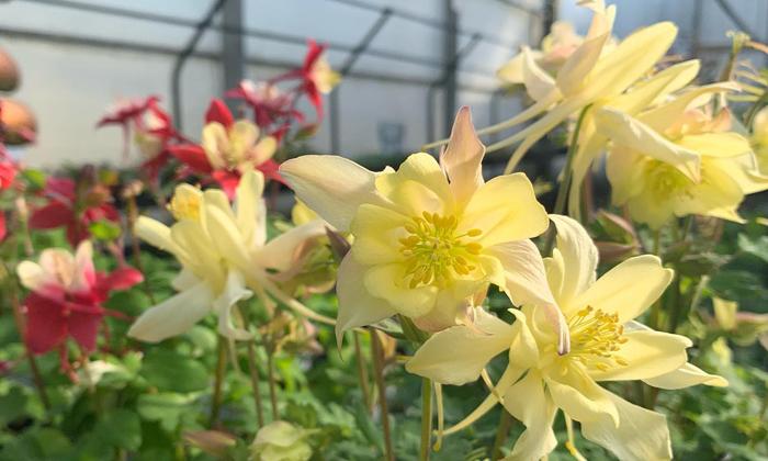 Shonnard's Nursery Florist and Landscape