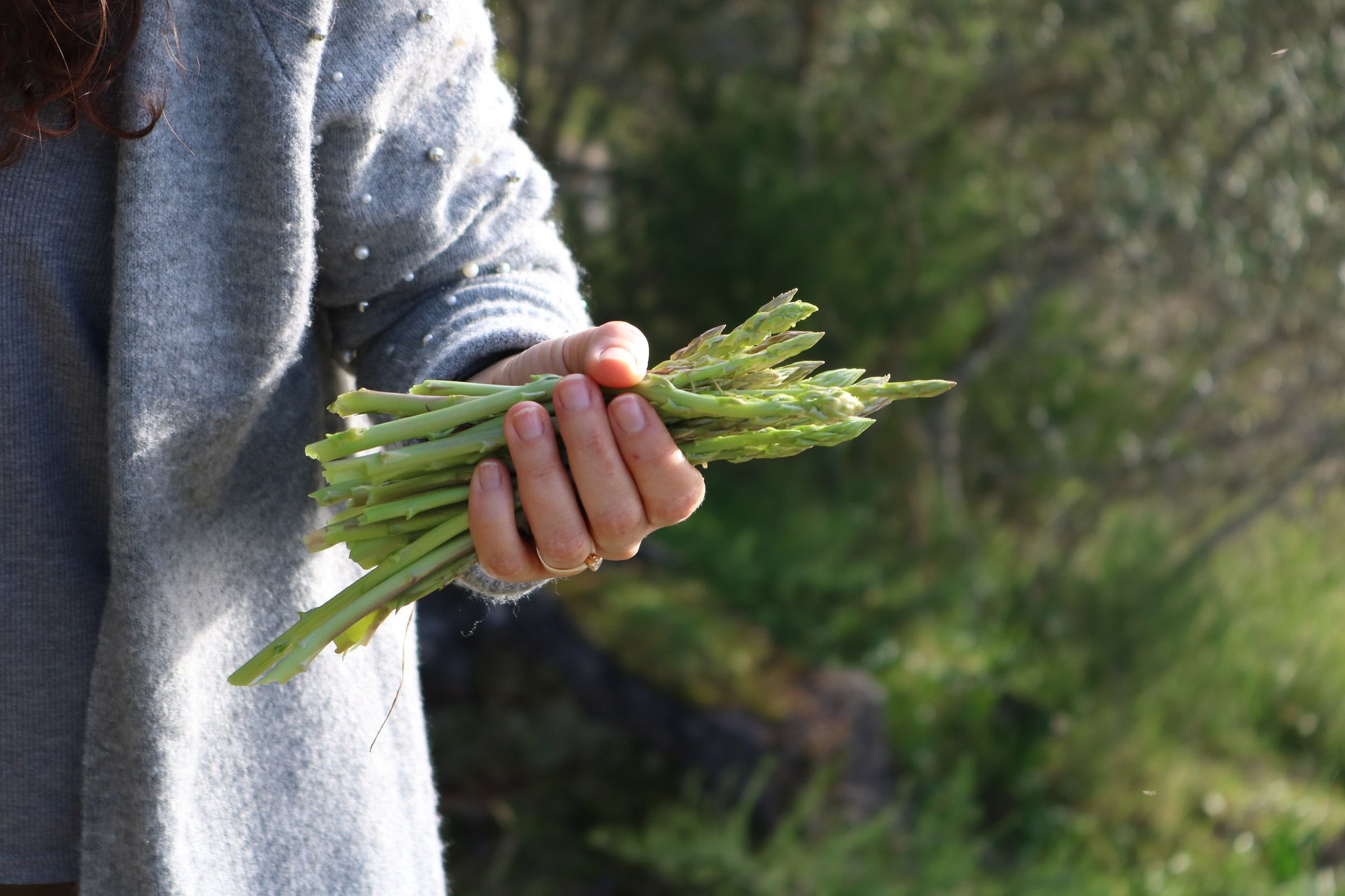 With the right care, asparagus beds will last decades
