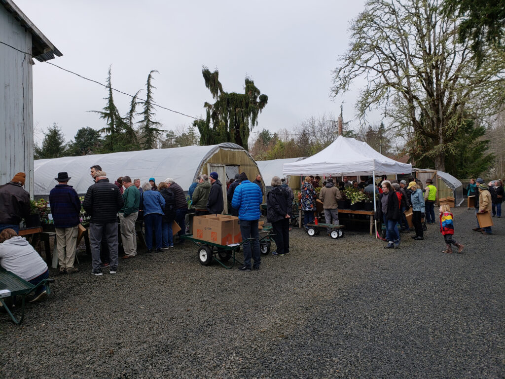 Shoppers peruse the Hellebore Open Garden in Eugene, Oregon in 2020, before mask mandates were in place. Photo by Ernie O'Byrne, Northwest Garden Nursery.