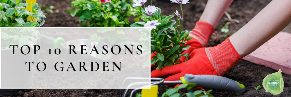 Top Ten Reasons to Garden