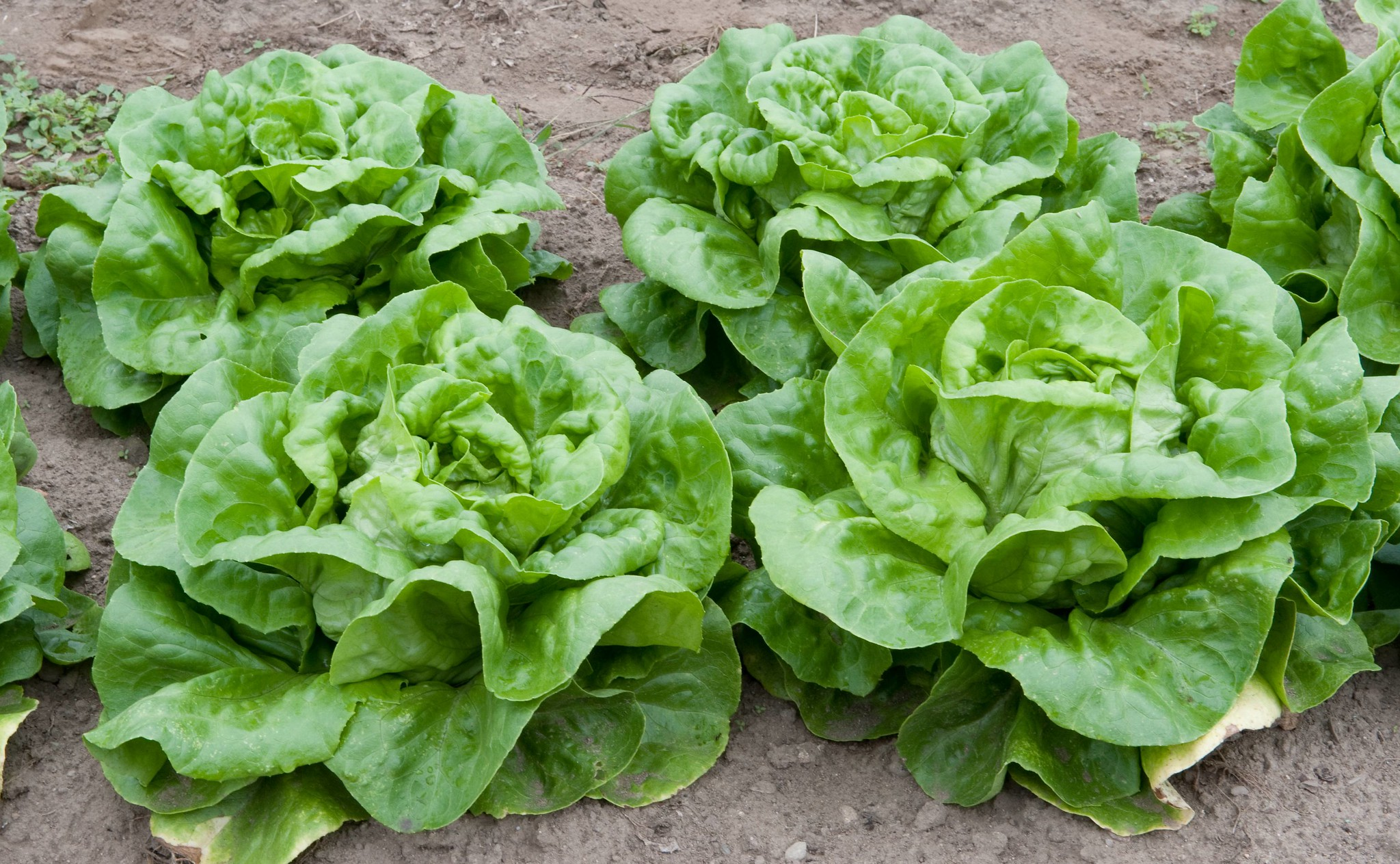 Plant veggies at the right time to avoid disappointment