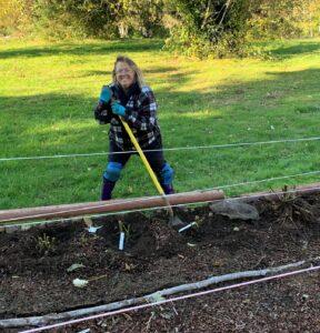 Photo of Julie Moore digging in dahlia bed