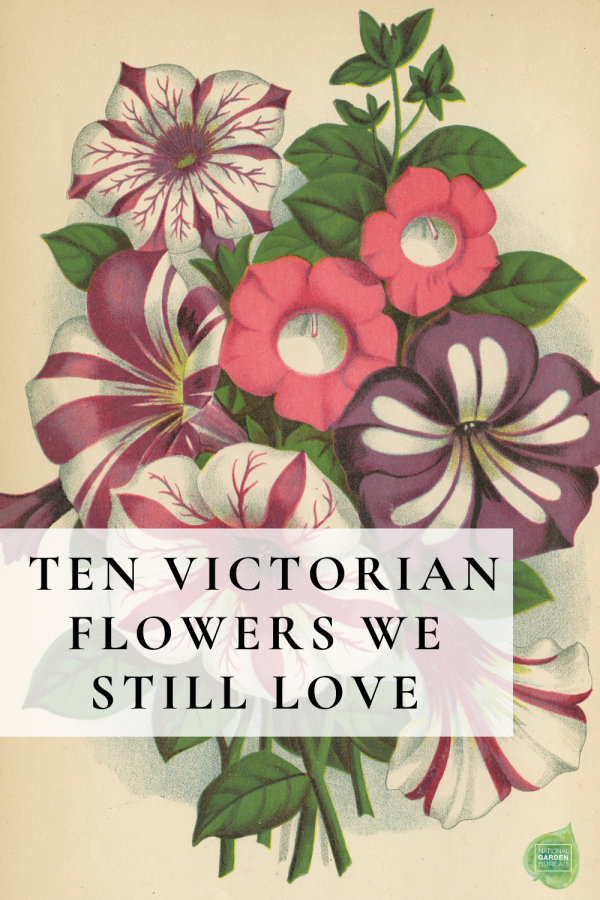 Ten Victorian Flowers We Still Love