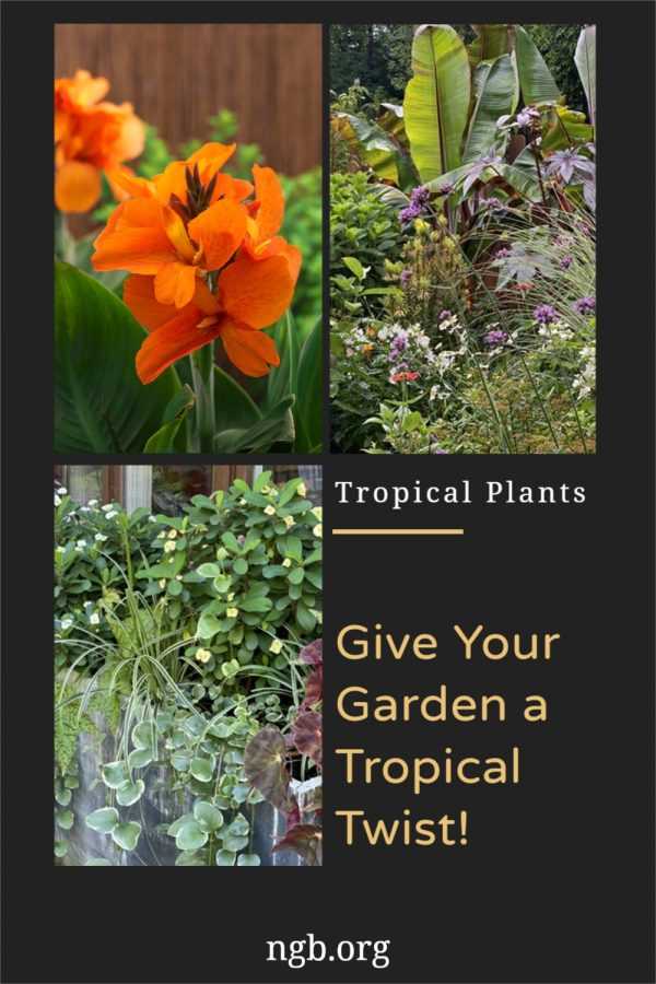 Give Your Garden a Tropical Twist!