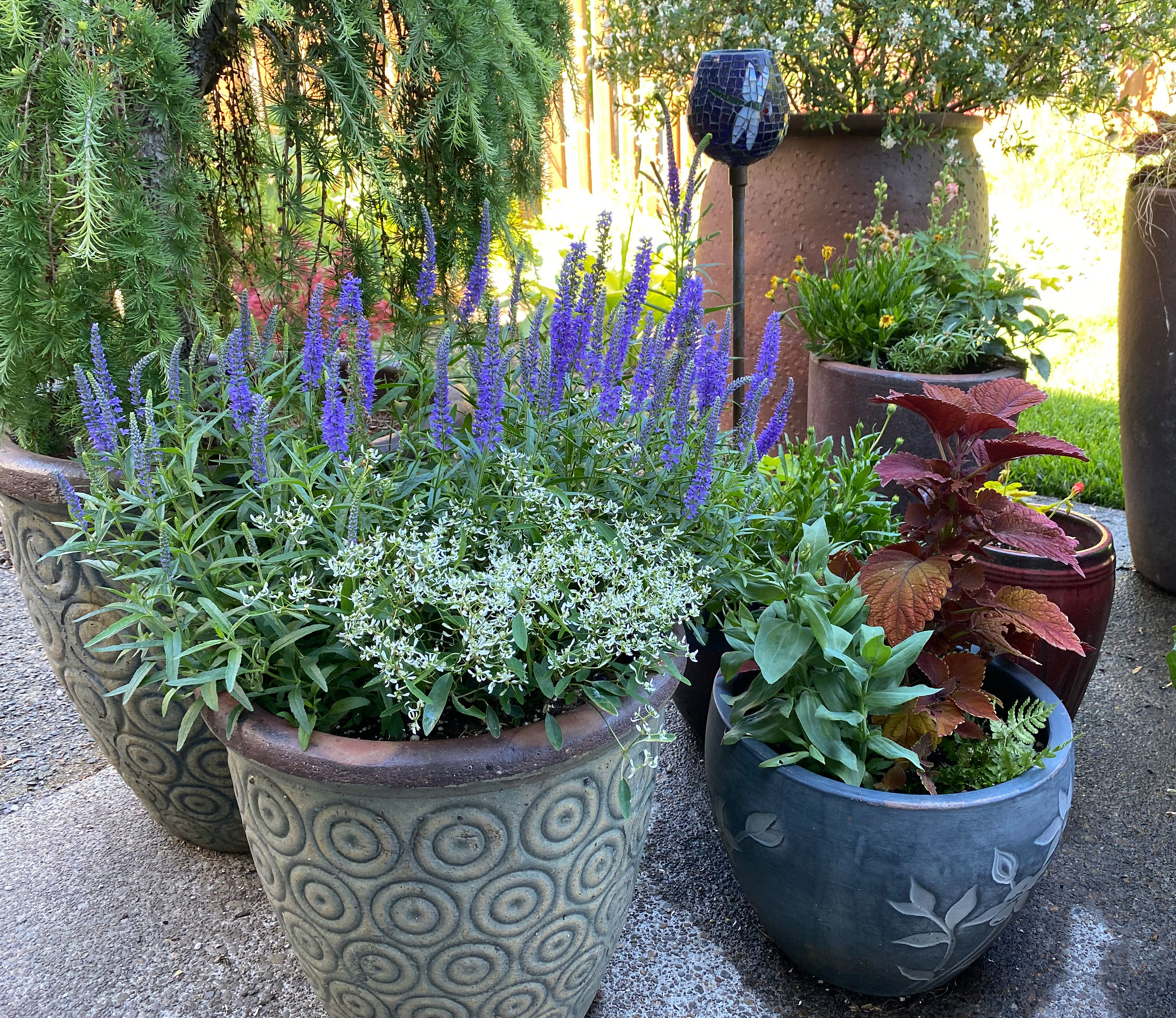 Tips for gardening in extreme heat