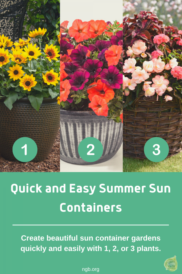 Quick and Easy Summer Sun Containers, 1-2-3!