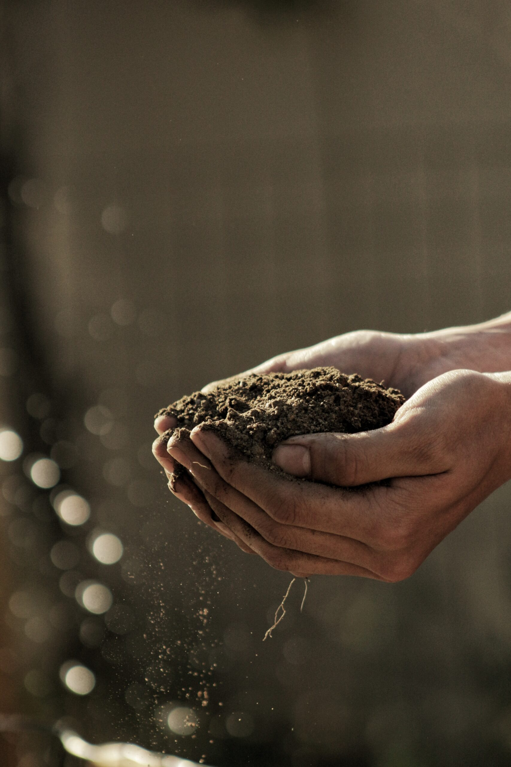 Keeping soil pH in the right range is essential