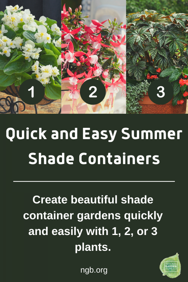 Quick and Easy Summer Shade Containers 1-2-3
