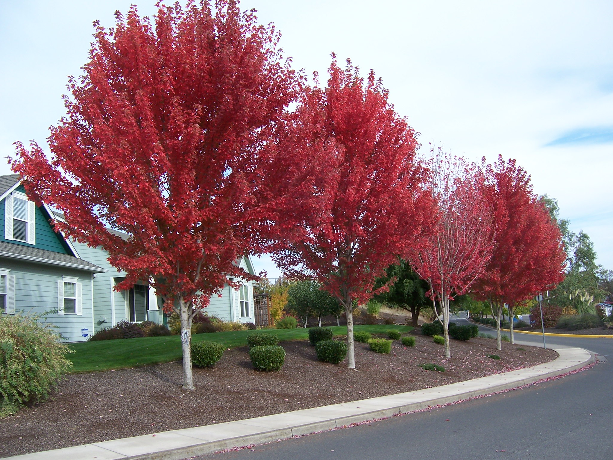 10 trees for fiery fall color