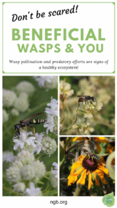 Beneficial wasps