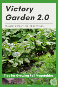 Fall is for planting Vegetables