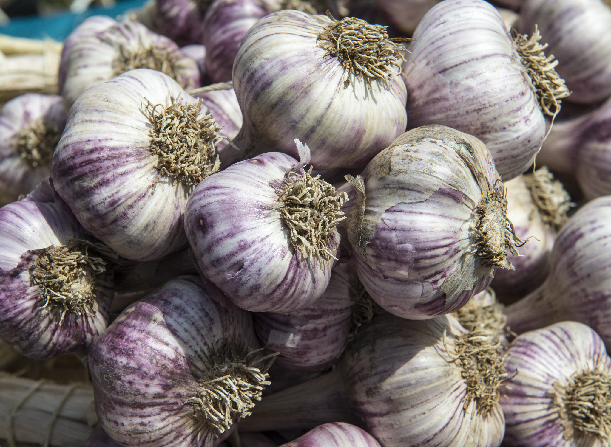 Get your garlic on: A primer on planting, growing and harvesting