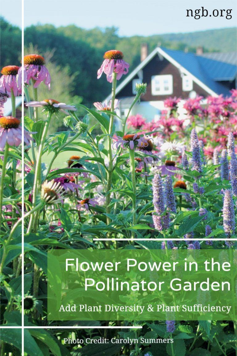 Flower Power in the Pollinator Victory Garden