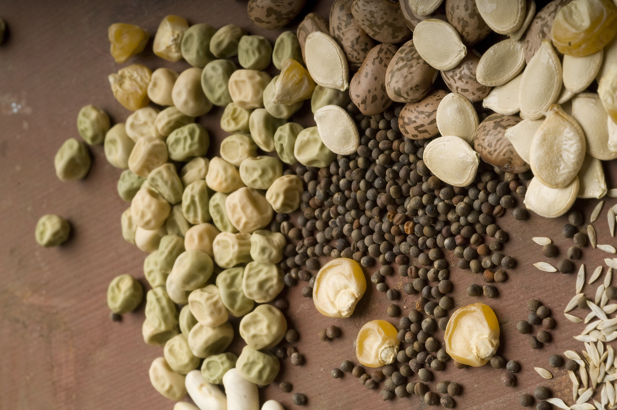 Seize some seeds from the garden for planting next year