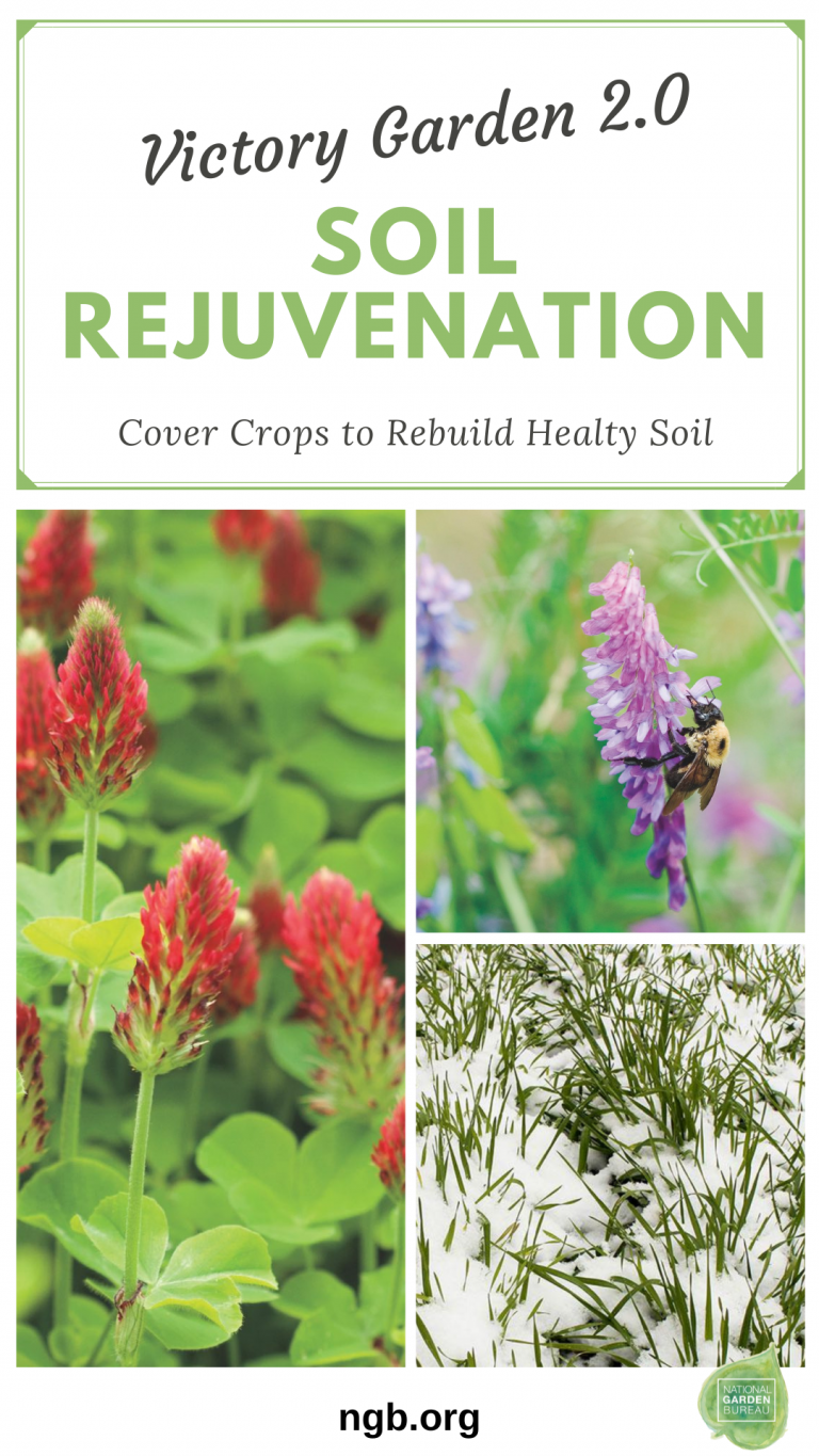 How to rebuild healthy soil this winter